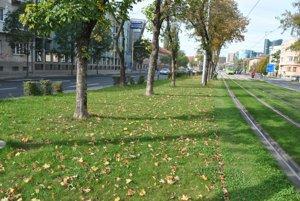 Štúrova ulica. Takto vyzerala pred kosením.