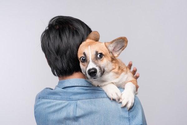 Pes vycíti vašu emóciu.