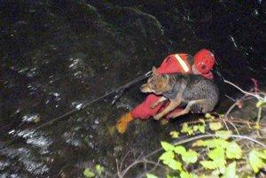 Do vody sa hasiči spustili pre psov na lane v špeciálnych odevoch.