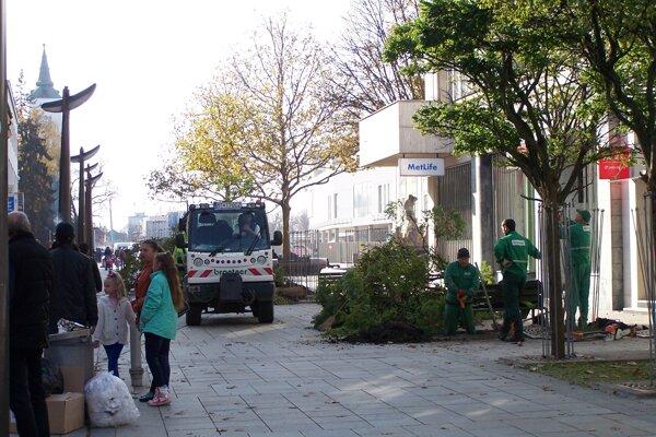 V centre Martina začali s výrubom stromov.