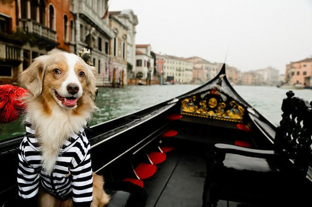 Cestovanie so psom je zábava.