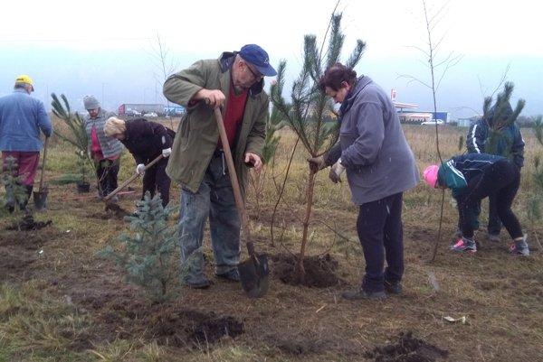 Päť druhov stromov vytvorí novú aleju pri cyklochodníku v Tepličke nad Váhom.