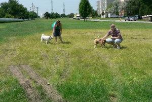 Golianova ulica, sídlisko Linčianska. V tejto časti pribudne vedľa potrubia park. Teraz je to iba trávnatá plocha, ktorú využívajú psíčkari.