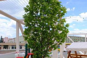 Mesto riešilo zeleň aj v rámci kontajnerov letnom pavilóne.