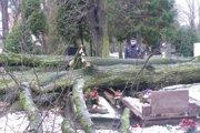 Na Národnom cintoríne víchor lámal stromy.