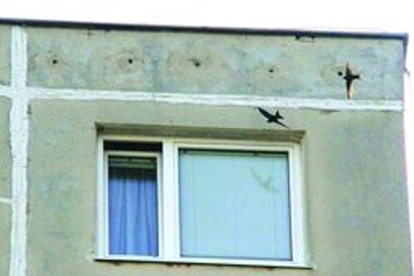 Pri zatepľovaní dochádza  aj k zamurovaniu hniezd dážďovníkov.