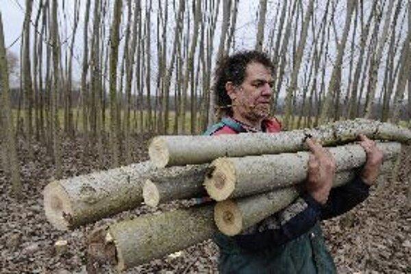 Po rýchlorastúcich japonských topoľoch na Frýdlantsku, ktoré sú zdrojom biomasy, je veľký dopyt. Podobné projekty vznikajú aj na Slovensku