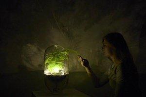 Živé svetlo z rastliny.