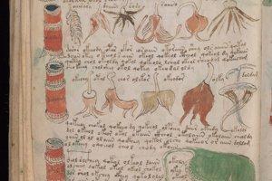 Časť Voynichovho rukopisu s ilustráciami koreňov sa mohla venovať liečiteľstvu.