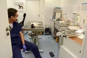 """Pacientka v """"zubárskom kresle"""". Mačka absolvuje zubársky zákrok."""