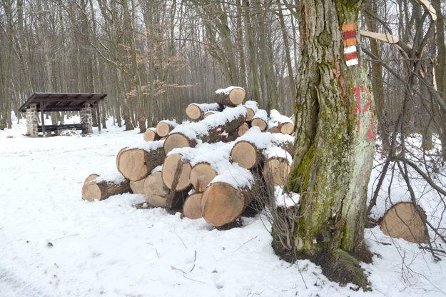 Nórske fondy. Lesníci tvrdia, že peniaze využili účelne.
