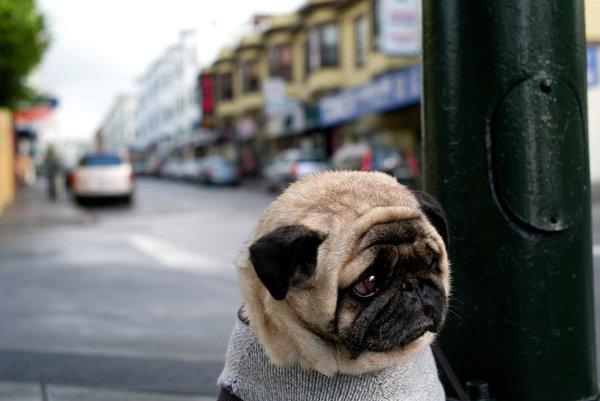 Psi vedia rozpoznať vaše emócie vďaka kombinovanému zmyslovému vnímaniu.