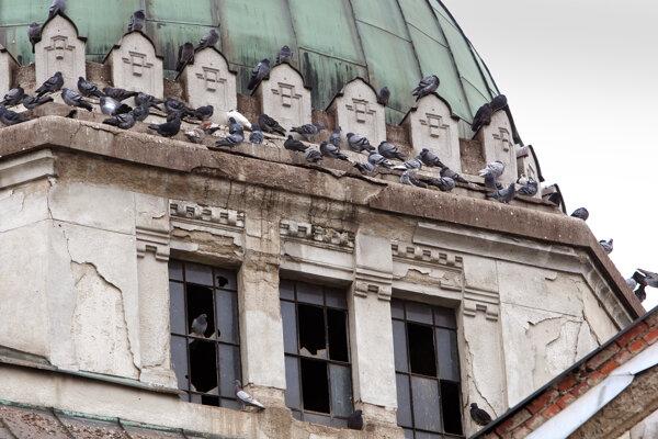 Ešte nedávno bola synagóga útočiskom pre holuby.