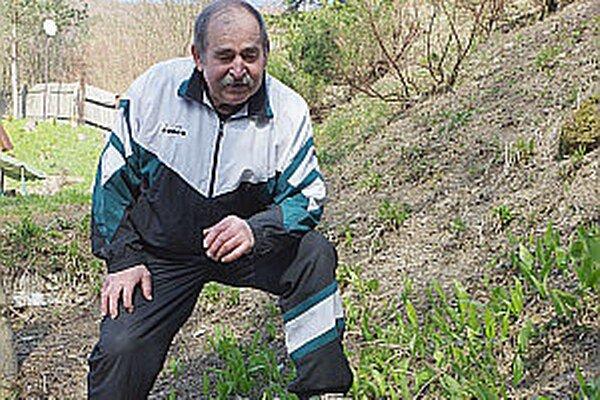 Bylinkár zo Záriečia hovorí, že liečivka obľubuje vlhké a tienisté miesta. Dá sa však zameniť aj s jedovatými listami.