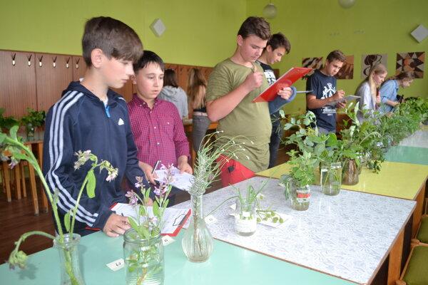 Žiaci z desiatich škôl horného Zemplína súťažili v poznávaní rastlín, semien a plodov.