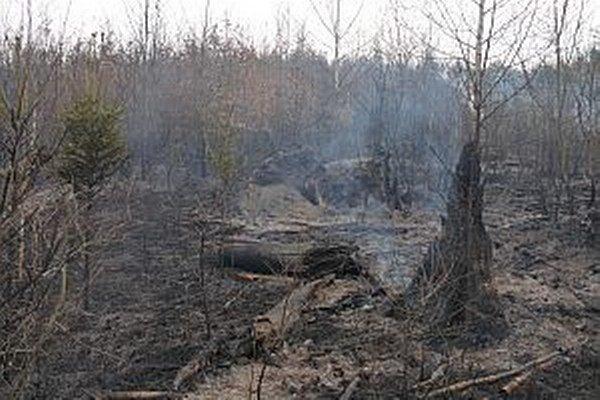 Oheň narobil v lese veľké škody.