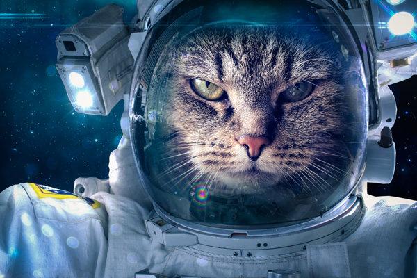 Pravda alebo mýtus: Boli do kozmu vystrelené aj mačky?