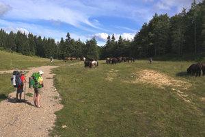 Počas túry stretali len minimum zvierat. Najpamätnejšie bolo stádo koní.