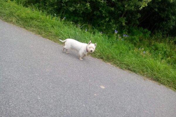 Malý psík ostal úplne bezradný, vôbec nechápal čo sa deje.