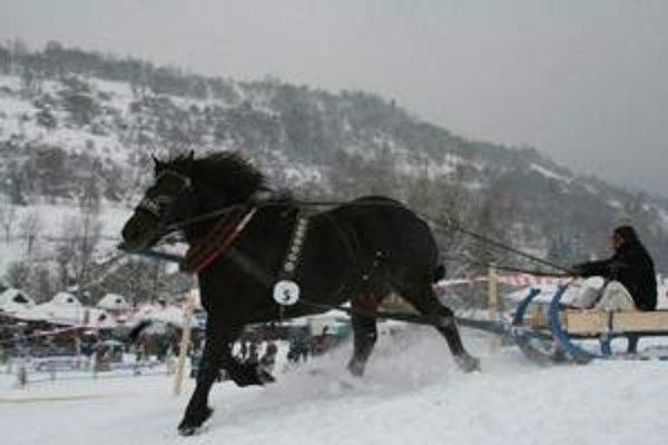 Kôň Cigáň Petra Pardusa zvíťazil v disciplíne Silák Terchovej.