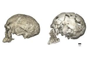 Evolučné zmeny vývoja lebiek moderného človeka. Vľavo je predok človeka z obdobia pred tristotisíc rokmi, vpravo z obdobia pred 95 tisíc rokmi.