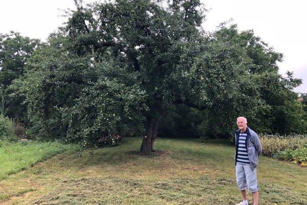 Jabloň rastie v záhrade Štefana Baca.