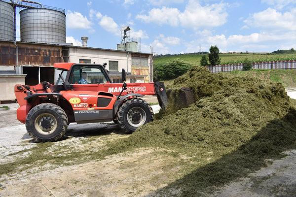 Trávnaté porasty kosia tri až päťkrát v roku. Vytvárajú si zásobu pre živočíšnu výrobu.