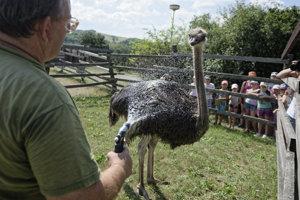 fa10cba6c Horúčavy si vyžiadali špeciálnu starostlivosť o zvieratá v košickej ...