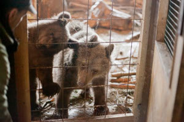 Medvieďatá Miško a Hanka