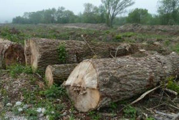 Vypílené stromy po vyťažení štrku nahradia nové.