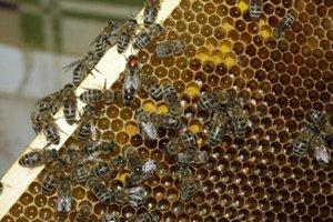 Včely vytvárajú niekoľko produktov, vďaka ktorým môžeme byť zdravší.