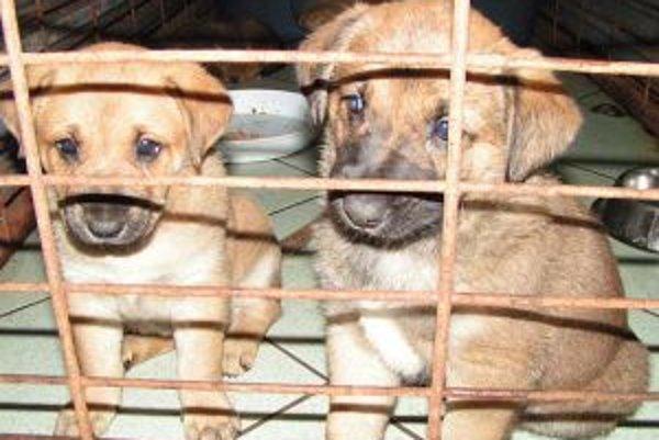 Miestny poplatok za psa z útulku od januára klesne.