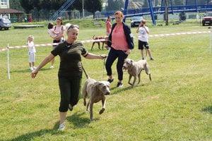 Predvádzanie psov pred porotou.