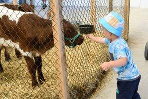 13. ročník Národnej výstavy hospodárskych zvierat.