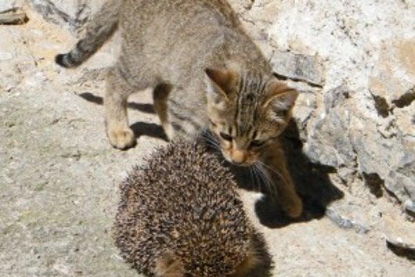 Kocúr Muro si našiel nového kamaráta.
