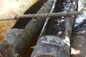 Kanoe vyhĺbené z palmových kmeňov.