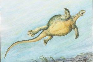 Ilustrácia korytnačky Eorhynchochelys vo vode.