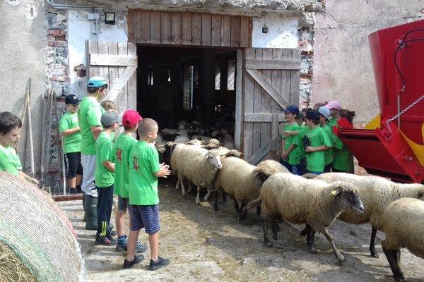 Deti navštívili aj ovčiu farmu.