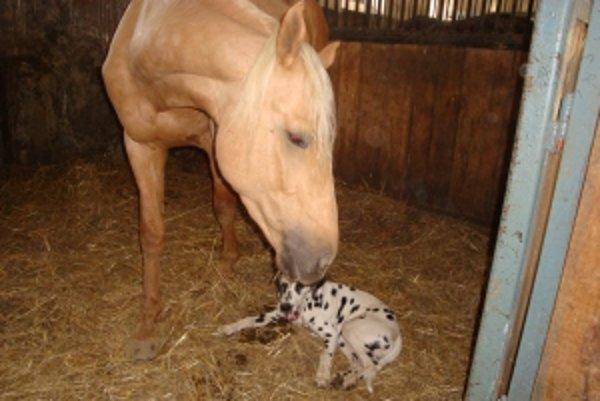 Kone vedia liečiť svojím teplom.