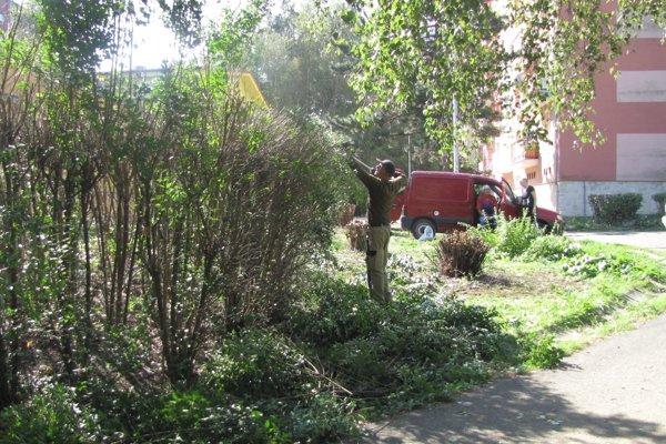 Záhradnícke a rekreačné služby mesta už orezali husté porasty, čím sa lokalita presvetlila.