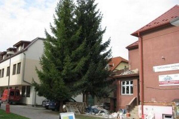 Stromy chcú vyrúbať, lebo vraj poškodzujú budovu.
