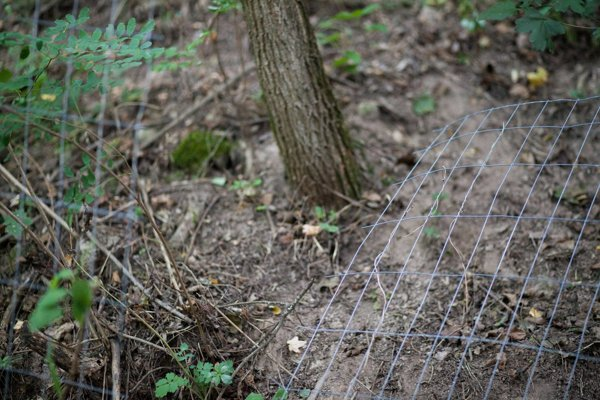 Zničili plot a ukradli štyri vrecia krmiva pre psov.