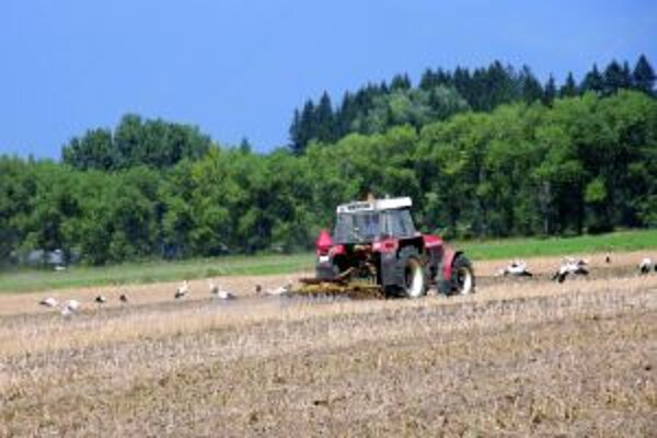 Bociany zbierajú potravu za idúcim traktorom.