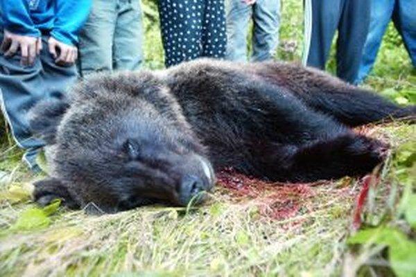 Mladý medveď sa dostal do rany poľovníkovi v Háji.