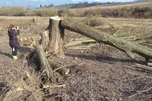 Vyťaté stromy si prišli zdokumentovať aj úrady.