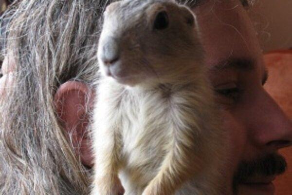 Toto je svišť prériový, ktorého prihlásil do súťaže jeden z vás. Využite aj vy tú možnosť a prihláste do súťaže svojho miláčika.