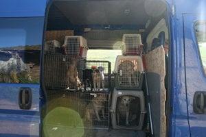 Prevoz odchytených zvierat