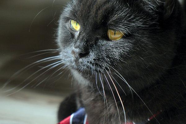 Kandidátkou na primátorku Popradu je mačka Mafia.