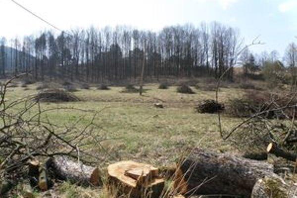 Podnikateľ tvrdí, že stromy ohrozovali okolie, a tak na povolenie od obce nečakal. Starosta a odborníci si myslia niečo iné.