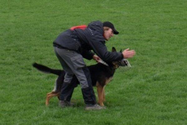 Revír. Disciplína, pri ktorej psy vyhľadávajú skrytého figuranta pod drevenými debnami. Argo dostal za úspešné vyhľadanie a označenie miesta 32 z 50 bodov.